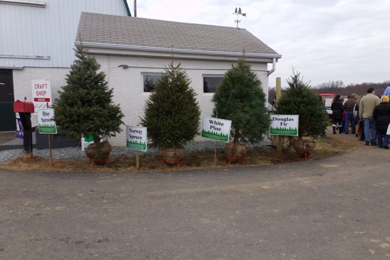 A variety of trees are available